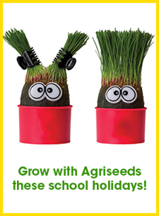 Grass head growing competition!