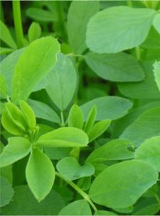 Especies y Cultivares